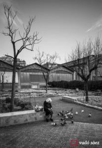 Anciana alimentant als coloms, Mercat del Ninot de Barcelona