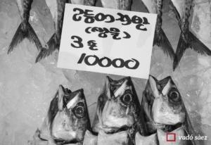 Peixos del mercat del peix Noryangjin a Seül